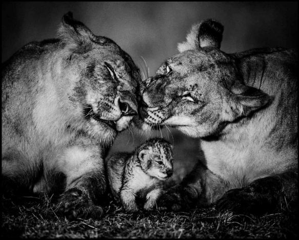LaurentBaheux08b