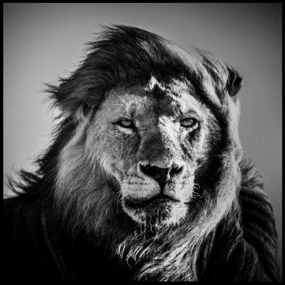 LaurentBaheux08e